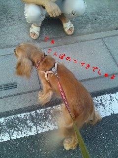 アルバの散歩7