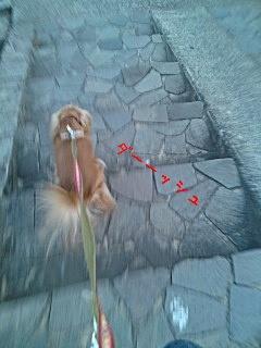 アルバの散歩16