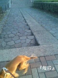 アルバの散歩15