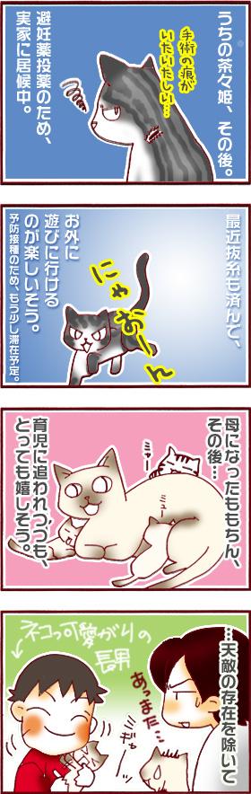 子猫を猫っ可愛がりすぎる長男