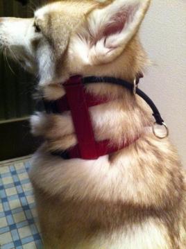 collar_2