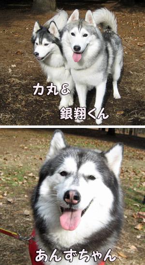 力丸&銀翔くん、あんずちゃん