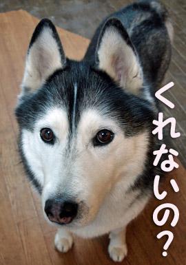 03-04-01-015_20090401205124.jpg
