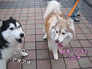 04-2009-09-11-010.jpg