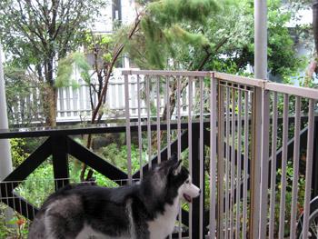 04-2009-10-08-009.jpg