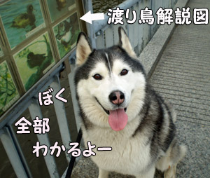 04-422014.jpg
