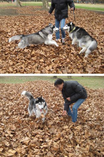 枯れ葉がいっぱい