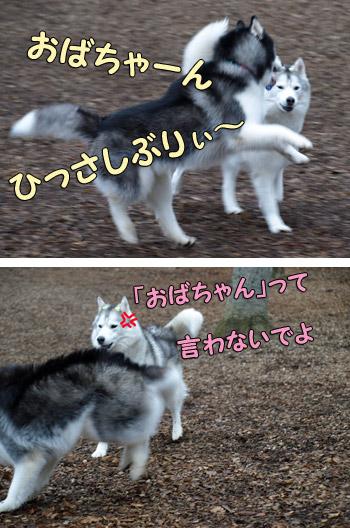 ポトフ&あられちゃん