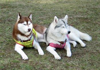 アンナちゃん&ティナちゃん