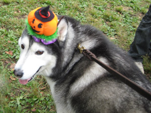 かぼちゃトリュフ