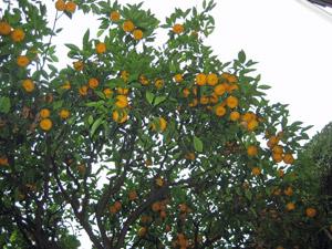 15-oranges.jpg