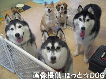 17-chien.jpg