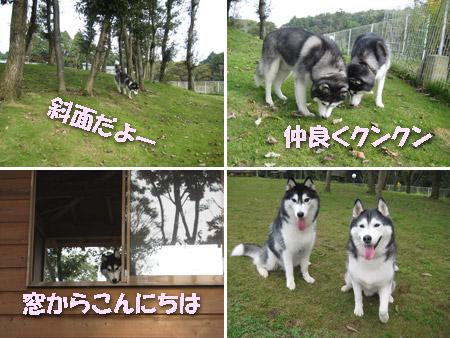 5tanoshii.jpg