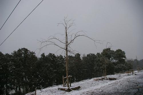 2008_02242月24kona~2