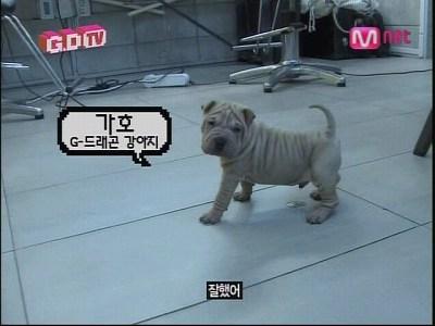 090819 Mnet GDTV+2NE1 TV (100)