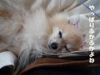 寝心地サイコーです。