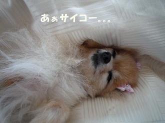 睡魔には勝てないの。。。