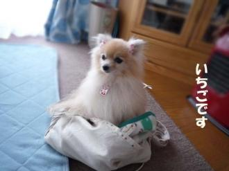 この袋好き♪