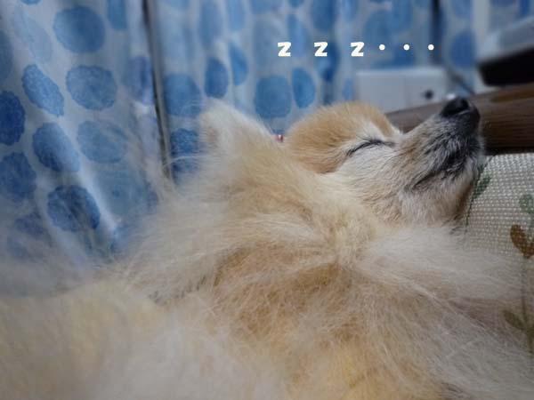 寝てます。。。