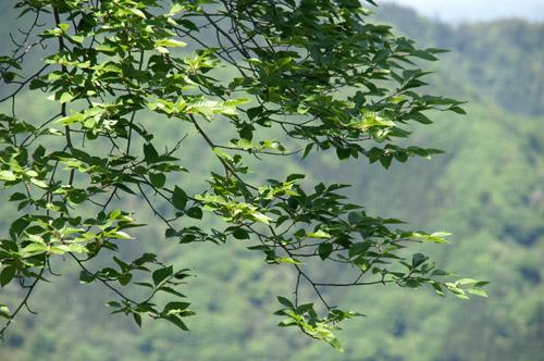 高尾山2008.5.6-1