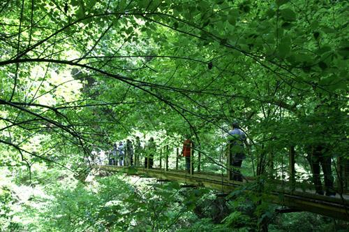 高尾山2008.5.6-4