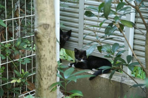 02-cat-br.jpg