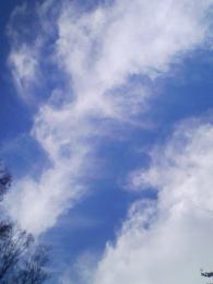 少し前の境内から見える空です。。