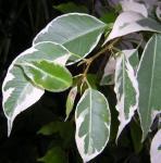 green0605-2.jpg