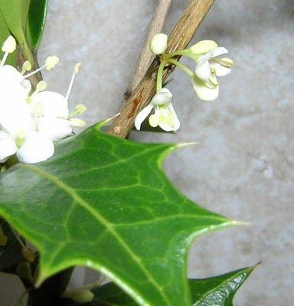 hiragi2007.11.jpg