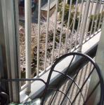 sakura2008-5.jpg
