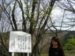 yoshino-usumidorisakura.jpg