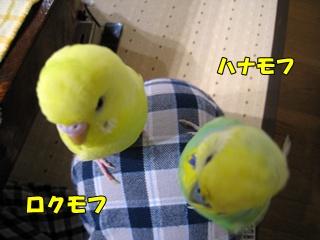 IMG231201-7.jpg