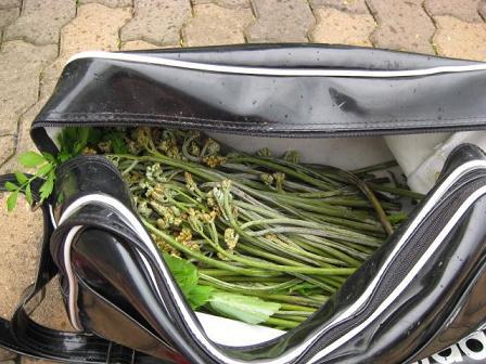 かばんからのぞく山菜