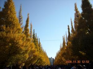 明治神宮外苑のいちょう並木