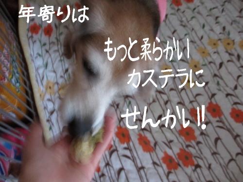 IMG_1644 (500x375)