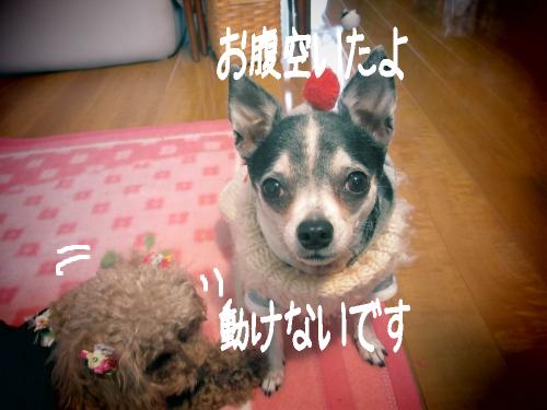 IMG_3771 (500x375)