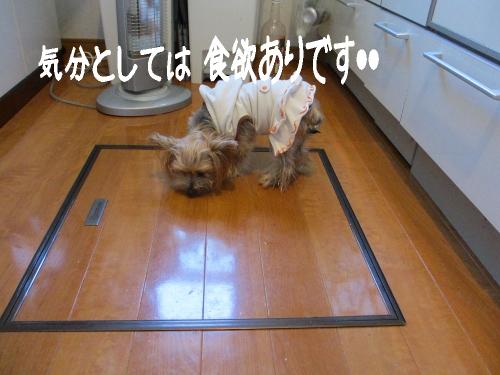 IMG_3987 (500x375)