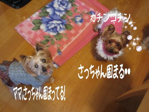 IMG_4194 (500x375)