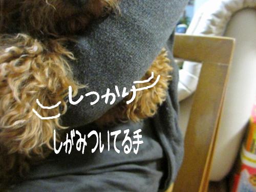 IMG_7290 (500x375)