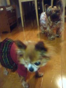 老犬2匹 介護だぞ~!-110427_1957~02.jpg
