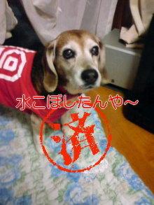 老犬2匹 介護だぞ~&私達、繁殖犬でした~-110506_1850~02_0001.jpg