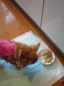 老犬2匹 介護だぞ~16歳ビーグル&13歳盲目のチワワ-110510_0840~01.jpg