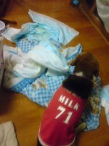 老犬2匹 介護だぞ~16歳ビーグル&13歳盲目のチワワ-110519_2245~01.jpg