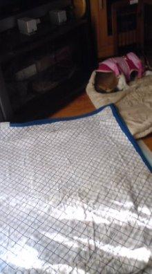 老犬2匹 介護だぞ~16歳ビーグル&13歳盲目のチワワ-110525_1614~01.jpg