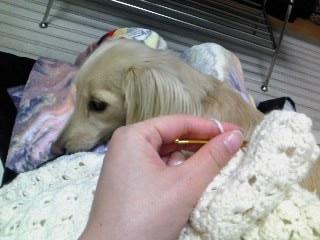 編み物カレル1