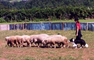 sheep031004.jpg