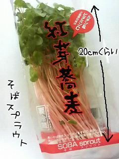 紅芽蕎麦スプラウト