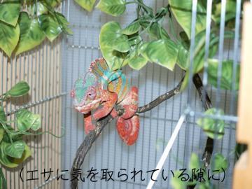 PicaF4010186.jpg
