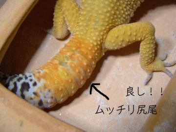 yuzu01415.jpg