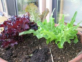 家庭菜園2